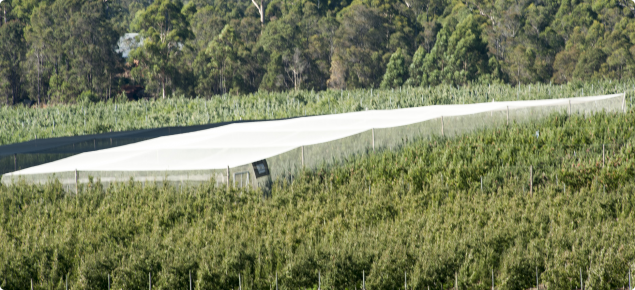 White permanent bird netting at Matijari orchards in Manjimup