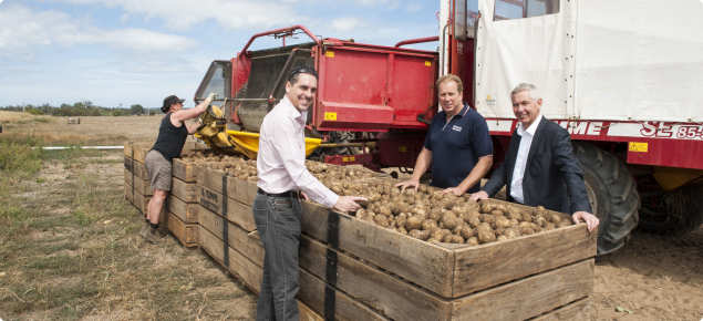 Potatoes being loaded into a bin after harvest