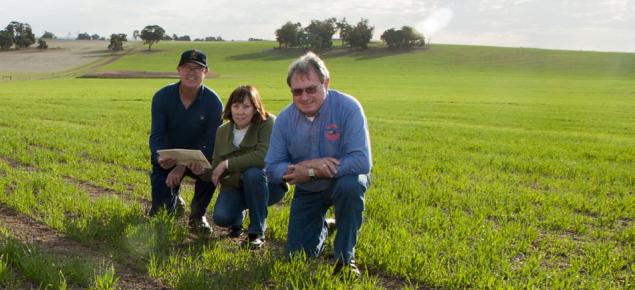 Oat breeding team inspecting trial plots early in the growing season