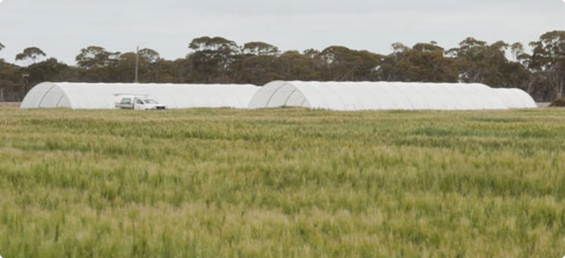 Trial plots in the foreground with rainout shelters protecting the trials in the distance.