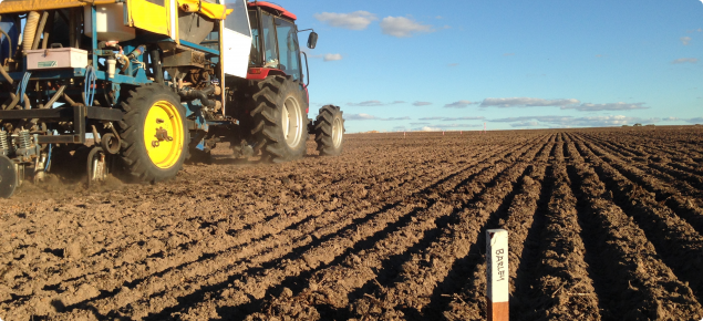 A photo of seeding in Yerecoin