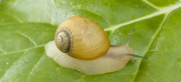 Macro shot of pale coloured snail on leaf