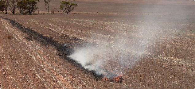 Burning stubble