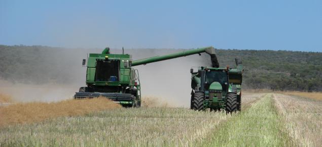 Canola Harvest Irwin
