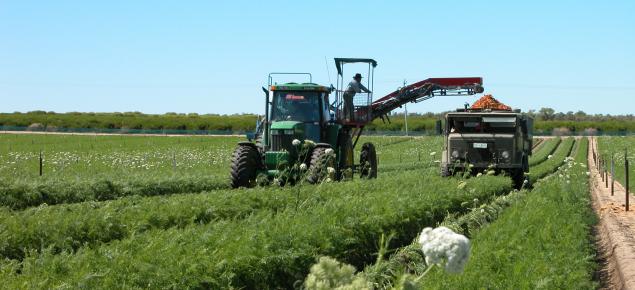 Harvesting carrots, West Gingin, Western Australia