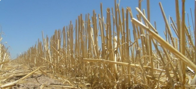 Crop stubble is a valuable on-farm resource, particularly for mixed enterprise farmers