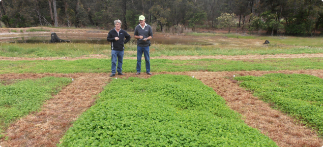 two men inspecting pasture trial