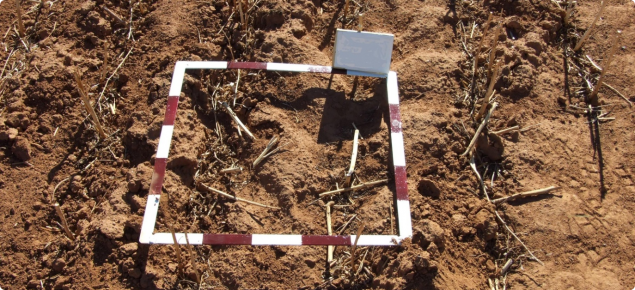Square quadrant on the ground used for determining the amount of loose soil and plant matter.