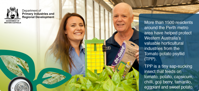 Image of department staff holding a sticky trap next to chill plants