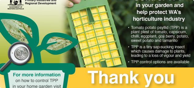 The Western Australian community has rallied to support spring surveillance efforts for the Tomato potato psyllid (TPP), with more than 1000 home gardeners taking part. The spring program is now complete.