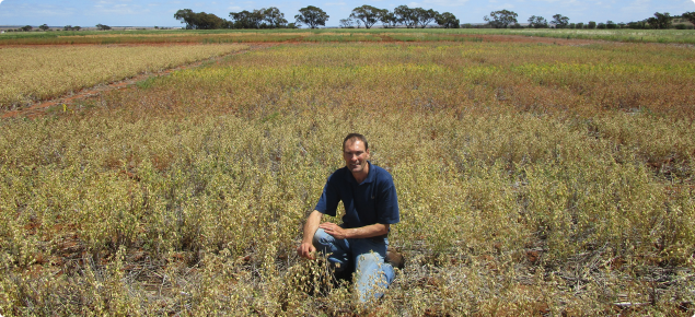 DPIRD Researcher Martin Harries inspecting plots desiccated at different times.