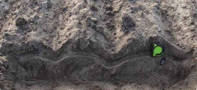 Furrows in severely repellent sandy soil, sown with winged points