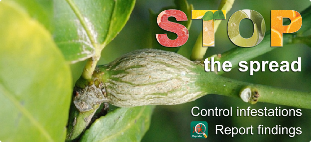banner Stop citrus gall wasp