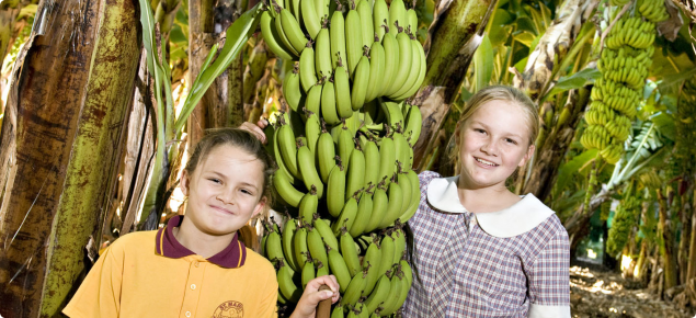 children in a banana plantation