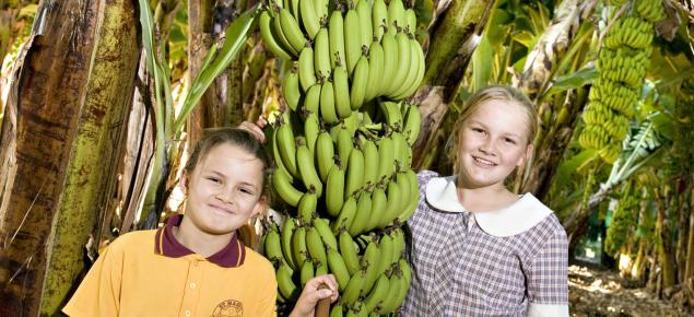 children in a banana plantation