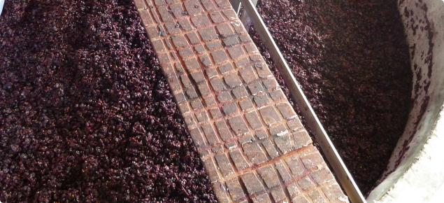 Grape marc in vat