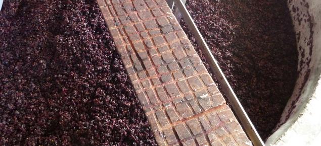 Grape marc in vat