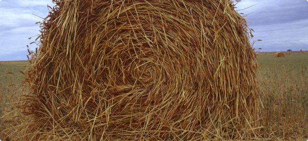 Cutting for hay could be a salvage option