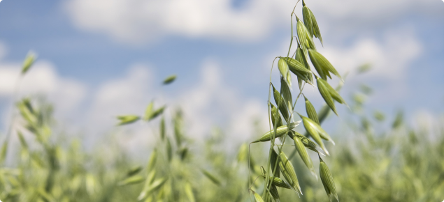 Oats: fertilisers and plant nutrition | Agriculture and Food