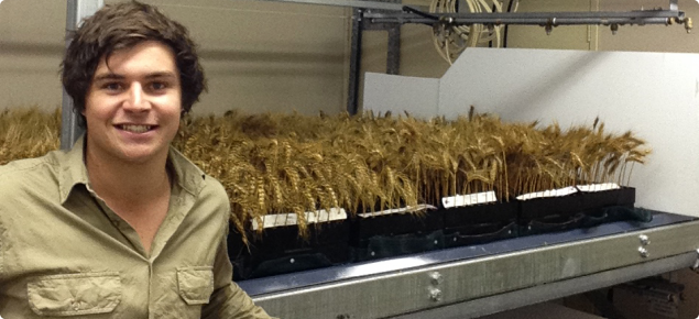DAFWA research officer Jeremy Curry is leading research to help wheat growers better manage the risk of sprouting.