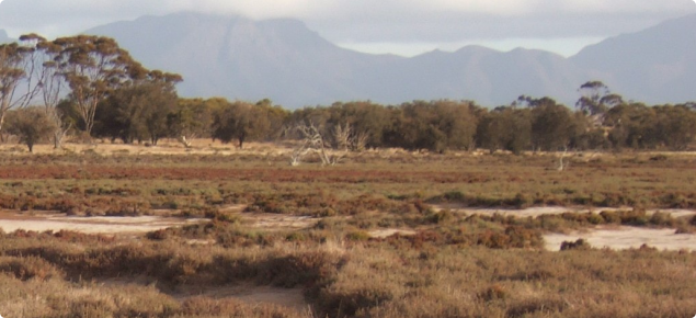 Saline vegetation on a waterway with the Stirling Ranges in the background