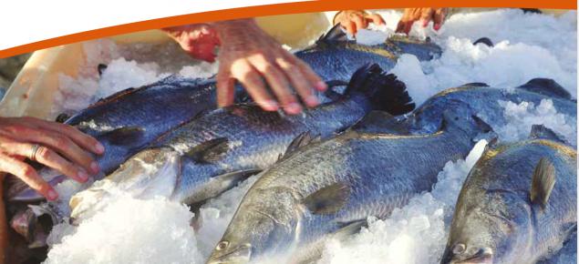 Aquaculture Salmon