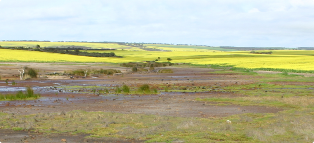 Bare saline ground expanding into cropping area