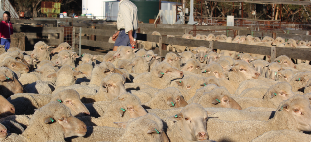 Video highlights benefits to producers when they call a vet