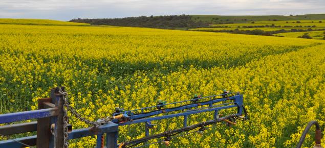 Fungicide spraying canola trials
