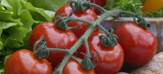 Tomato pests | Agriculture and Food