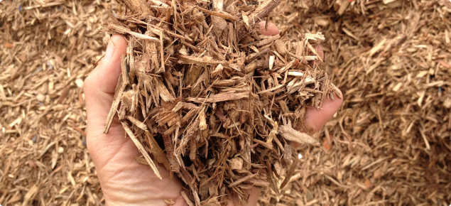 plantation grown woody biomass