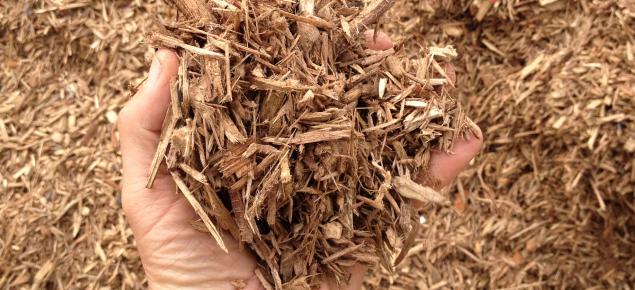 plantation grown woody biomass