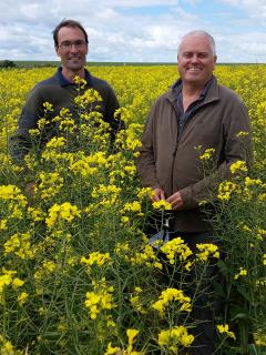 Two men standing in a canola crop