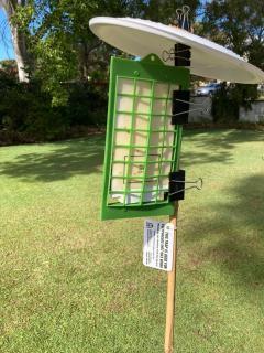 Polyphagous shot-hole borer trap