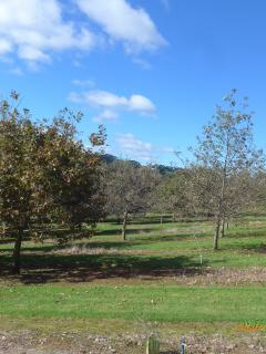 Variable growth of oak trees in a truffle orchard