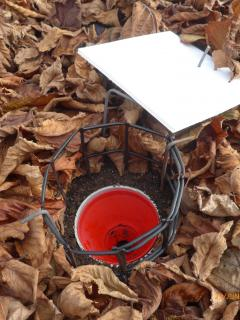Close up of a pitfall trap with leaf cover removed