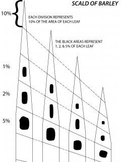 Percentage of leaf area covered by scald of barley