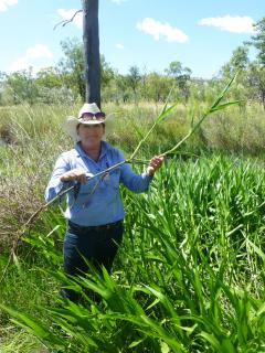 Department of Agriculture and Food biosecurity officer Tracey Vinnicombe with olive hymenachne, which was recently detected and treated in the East Kimberley.