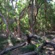 Photograph of dense vegetation around a La Grange wetland
