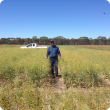 Research Officer Raj Malik in Gibson's Nitrogen trial