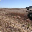 Small plot harvester, harvesting canola