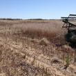 Small plot harvester, harvesting canola