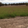 Photo showing green, knee high perennial pasture in paddock.