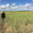 Crop disease surveillance activities in the field