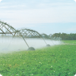 Potato crop being watered by a centre pivot irrigation system.