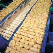 Potatoes being processed along a potato wash line