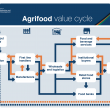 The agrifood value cycle