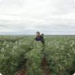 DAFWA Research Officer Martin Harries in Albus Lupins being grown at 44cm