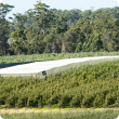 Netted apple demonstration site near Manjimup
