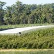 Netted apple demonstration site near Manjimup